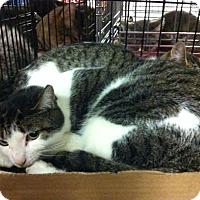 Adopt A Pet :: Emma - Pittstown, NJ