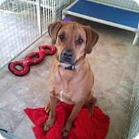 Adopt A Pet :: Riley - Westminster, MD