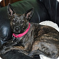 Shepherd (Unknown Type) Mix Dog for adoption in Chicago, Illinois - Cancun
