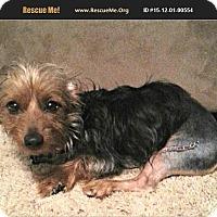 Adopt A Pet :: Robo - Lancaster, TX
