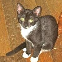 Adopt A Pet :: Daytona - Newtown, CT