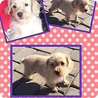 Adopt A Pet :: Tasha - Scottsdale, AZ
