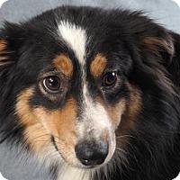 Adopt A Pet :: April - Colorado Springs, CO