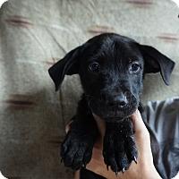 Adopt A Pet :: Tyson - Oviedo, FL