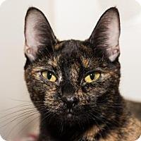 Adopt A Pet :: Ferrari - Lowell, MA