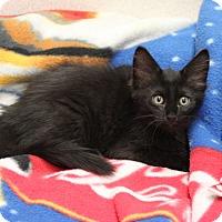 Adopt A Pet :: J.C, - Naperville, IL
