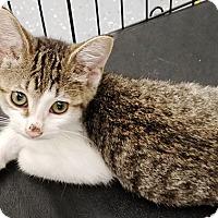 Adopt A Pet :: Paisley - Kalamazoo, MI