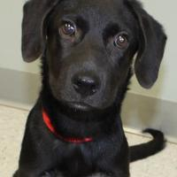 Adopt A Pet :: Fagan - Victoria, TX