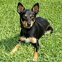 Adopt A Pet :: MINDY - Seattle, WA
