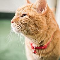 Adopt A Pet :: Danny Zuko - Clarksville, TN