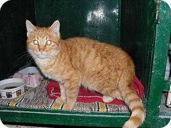 Domestic Shorthair Cat for adoption in Alden, Iowa - Faith
