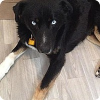 Adopt A Pet :: Quincy - Saskatoon, SK