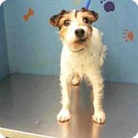 Adopt A Pet :: Daisy in Houston - Houston, TX