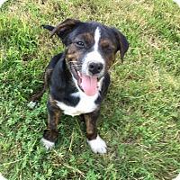 Adopt A Pet :: Miller - Boston, MA