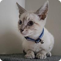 Adopt A Pet :: Cooper - Culver City, CA