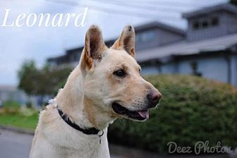 Shepherd (Unknown Type) Mix Dog for adoption in Beckley, West Virginia - Leonard