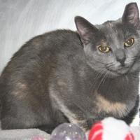 Adopt A Pet :: Nula - Green Bay, WI