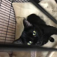 Adopt A Pet :: Betty - Hastings, MN