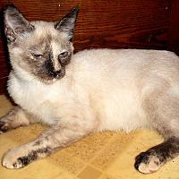 Adopt A Pet :: Xaria - Chattanooga, TN