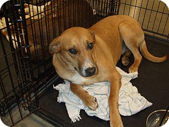 Australian Shepherd Mix Dog for adoption in CLARKSVILLE, Texas - SUZY