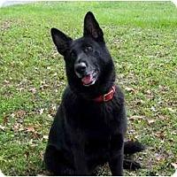 Adopt A Pet :: Tillie - Green Cove Springs, FL