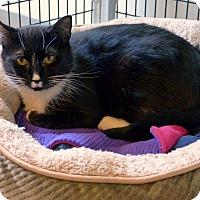 Adopt A Pet :: Marigold - Victor, NY