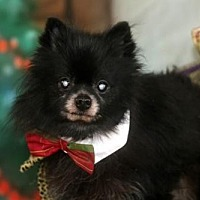 Adopt A Pet :: Tito - Dallas, TX