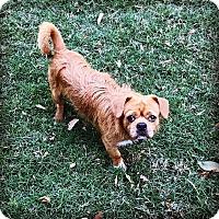 Adopt A Pet :: Sherman - Austin, TX