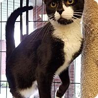 Adopt A Pet :: Spot - Philadelphia, PA