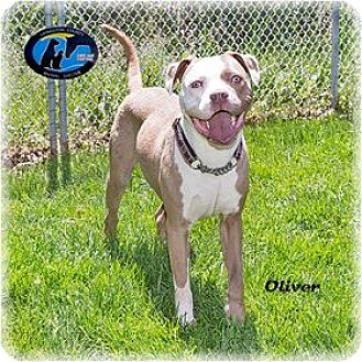 Mixed Breed (Medium) Mix Dog for adoption in Howell, Michigan - Oliver