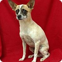 Adopt A Pet :: Robbie($75) - Redding, CA