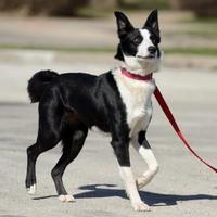 Adopt A Pet :: Mikita - Frankfort, IL