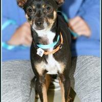 Adopt A Pet :: SHADOW - Frederick, MD