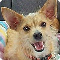 Adopt A Pet :: Peanut 2 - Norman, OK