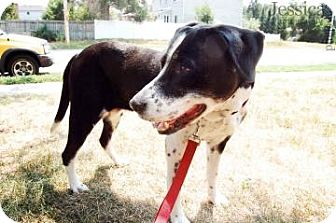 Collie/Pointer Mix Dog for adoption in Barrie, Ontario - Katie - Courtesy Post