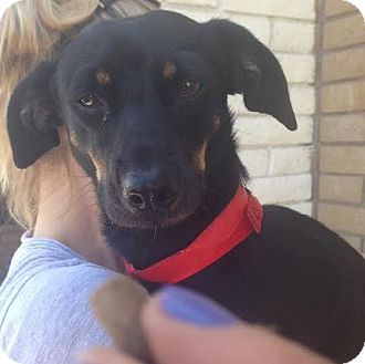 Dachshund Mix Dog for adoption in Encino, California - Muffy
