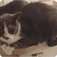 Adopt A Pet :: Gus - Franklin, NC