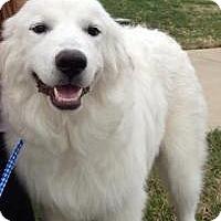 Adopt A Pet :: Daisy - New Boston, NH