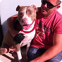Adopt A Pet :: MASTER - Ojai, CA