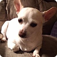 Adopt A Pet :: Kookie - Edmond, OK