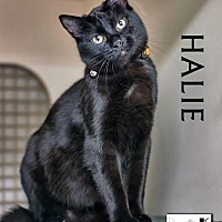 Adopt A Pet :: Halie - Albuquerque, NM
