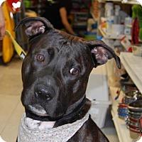 Adopt A Pet :: Spike - Brooklyn, NY