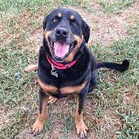 Adopt A Pet :: Lena - Palm Bay, FL