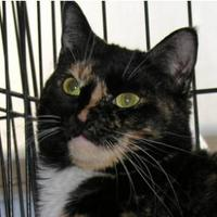 Adopt A Pet :: Mandy - Tilton, IL