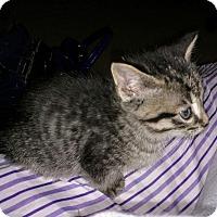 Adopt A Pet :: Capone - Smyrna, GA