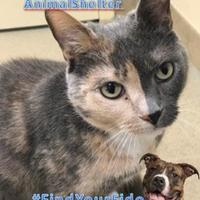 Adopt A Pet :: Sister Girl - Newport News, VA