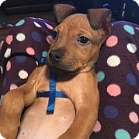 Adopt A Pet :: A436182 Manu - San Antonio, TX