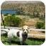 Photo 1 - Terrier (Unknown Type, Small) Mix Dog for adoption in El Cajon, California - scruffy