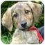 Photo 1 - Hound (Unknown Type)/Sheltie, Shetland Sheepdog Mix Puppy for adoption in Ladysmith, Wisconsin - Milo