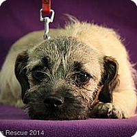 Adopt A Pet :: March - Broomfield, CO